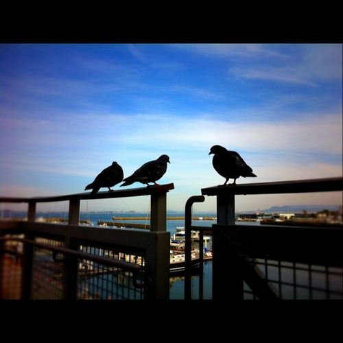 鳩の語らい